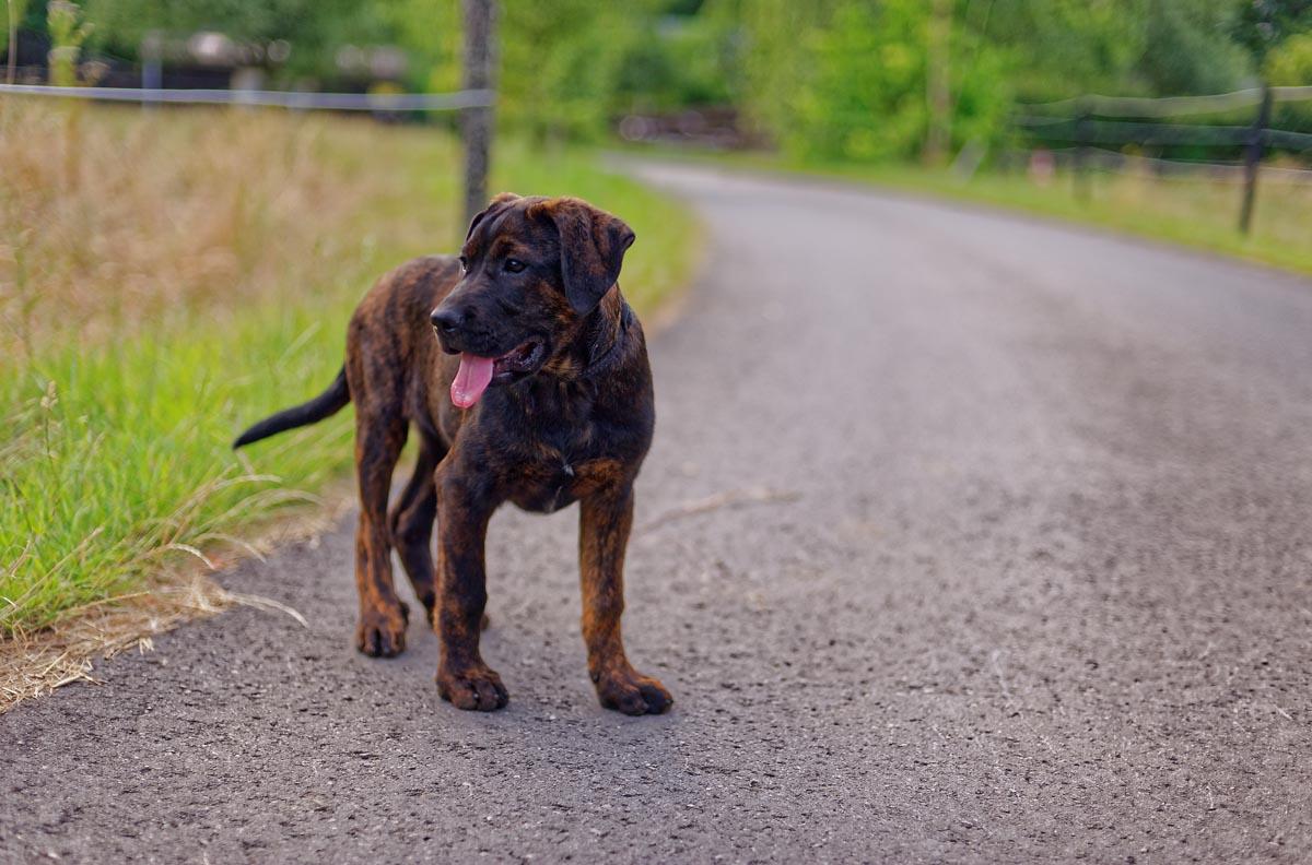 tierpension-lassie-grosser-hund