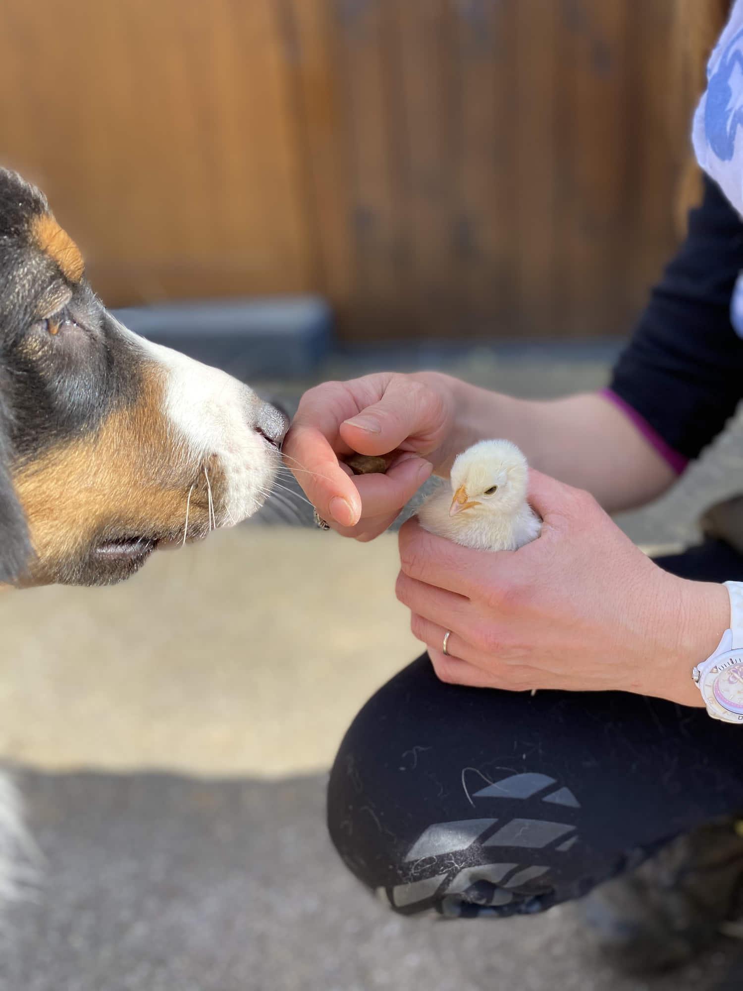 chien-sociabilisation-creche-lassie