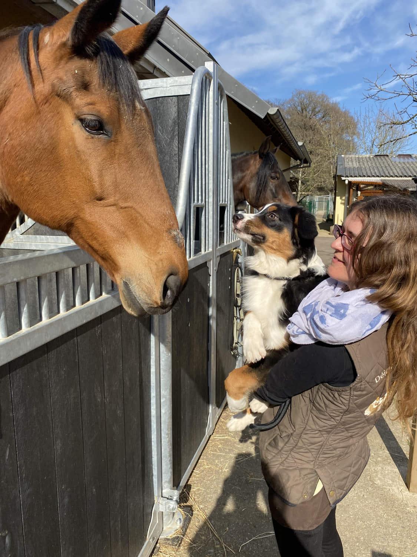 HuTa-Soziabilisierung-Hund-lassie