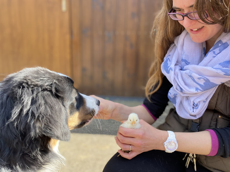 Canicreche-sociabilisation-chien-lassie