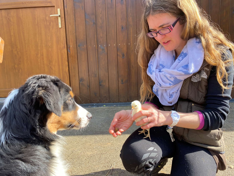 daycare-dog-sociabilization-lassie