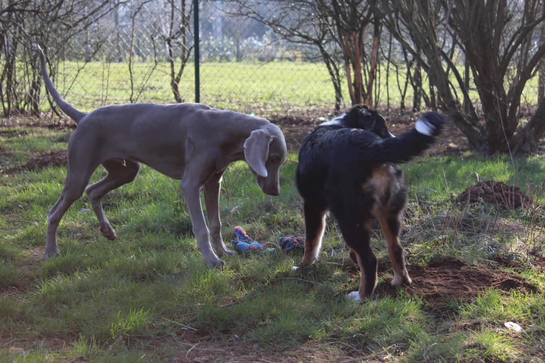 garde-chien-jour-lassie