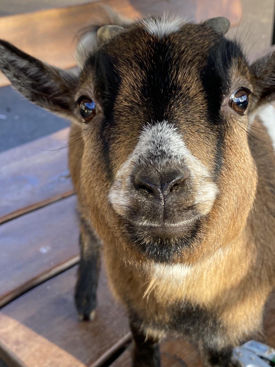 mini-zoo-deierepensioun-lassie-itzig