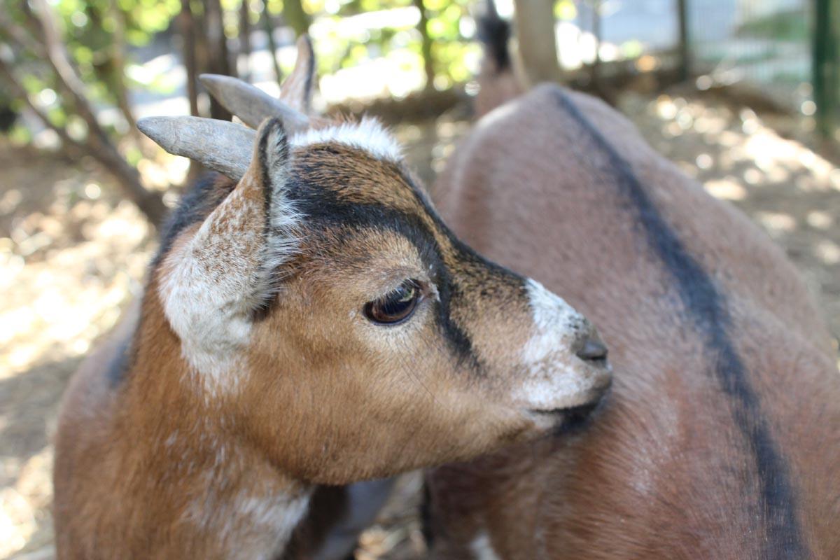 mini-zoo-pension-lassie