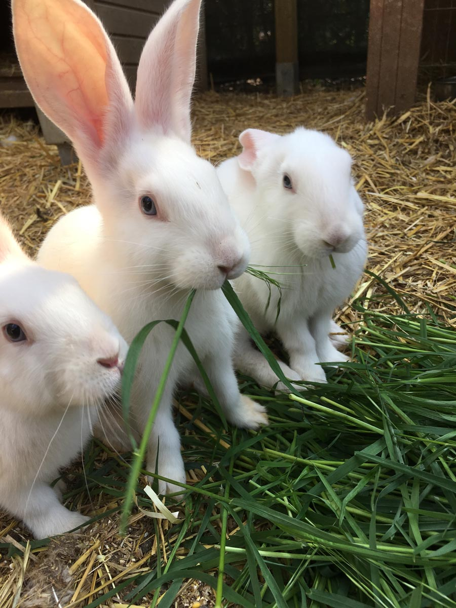 pension-pour-animaux-Luxembourg