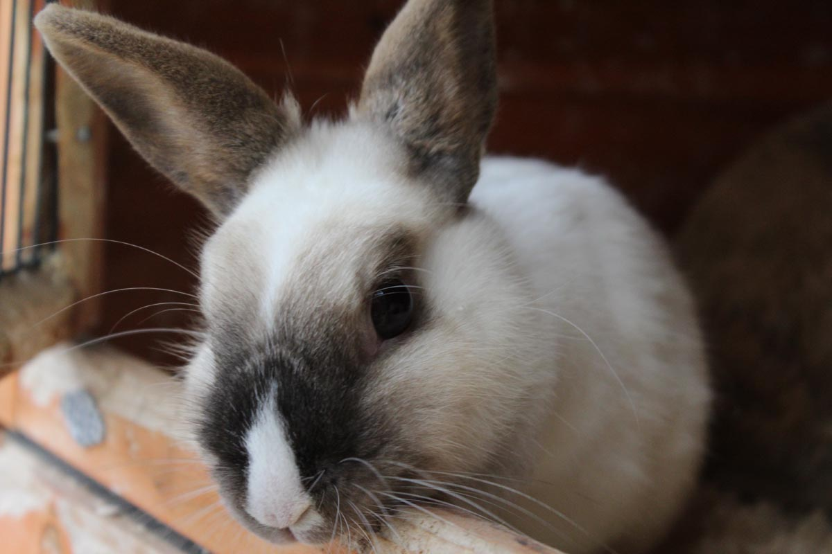 lapin-garde-petits-animaux-luxembourg