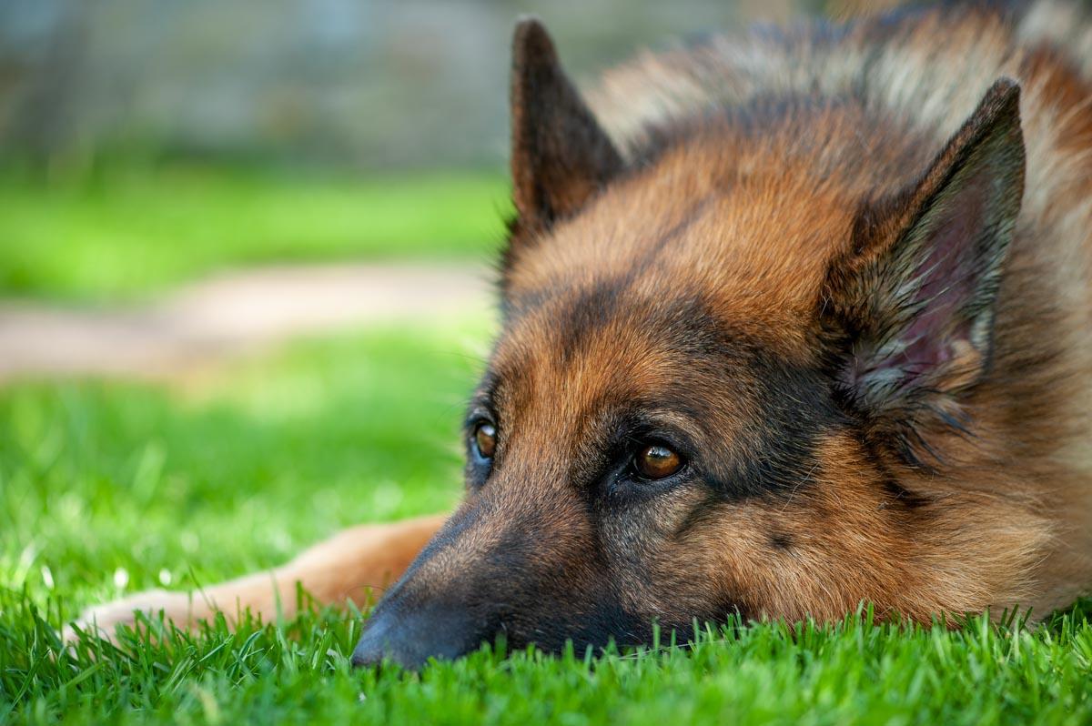 hotel-pour-chiens-Lassie-Itzig