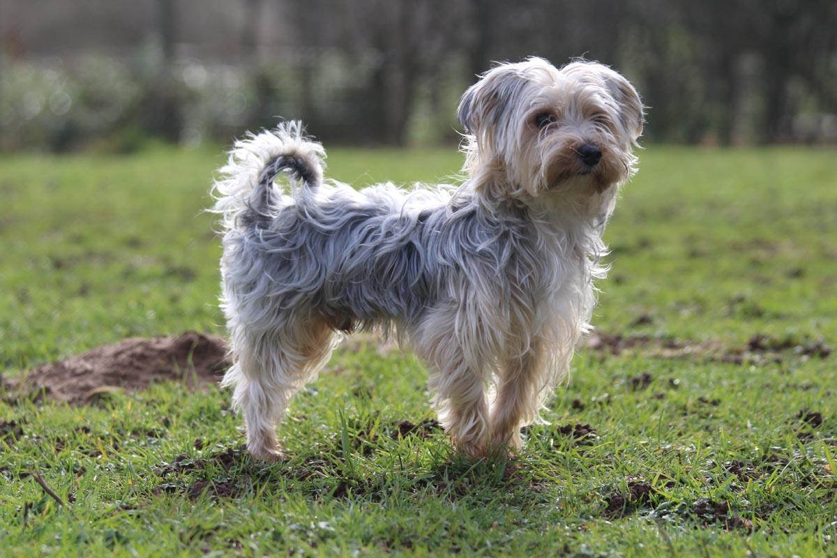 pension-petits-chiens-Lassie-Itzig